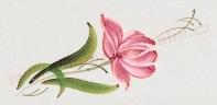 tulipan dekor